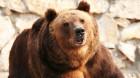 Male Croatian Bears Observed Having Oral Sex