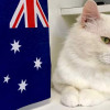 Australia Day is coming but don't forget, cats hate fireworks