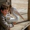 Review | Storm Boy re-imagines an Australian film classic