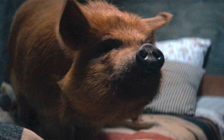 Review | Revenge thriller is on the menu with Nicholas Cage in 'Pig'