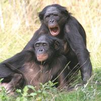srudies same animal attraction